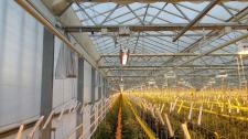 Innowacyjna lampa z Wrocławia – rewolucja dla rolnictwa?