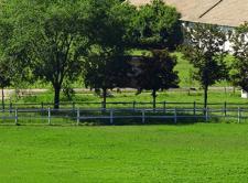Kupujemy dobrą mieszankę trawy do ogrodu – na co zwrócić uwagę?