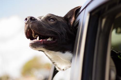 Pies podróżujący taksówką Glob-Trans Taxi Mielec