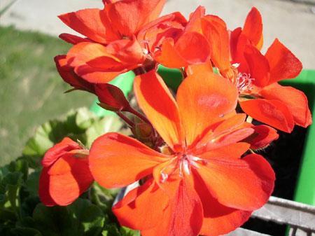 Wesołe kwiatki
