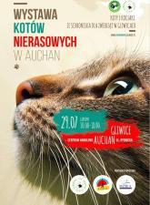 Odwiedź wystawę kotów nierasowych i dowiedz się, jak adoptować zwierzę