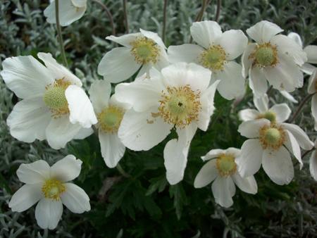 Białwe kwiaty
