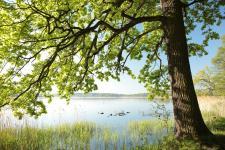 Podłogi Kaczkan – bliżej natury w Twoim domu